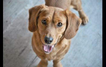 Pchły u psów- jak się ich pozbyć?