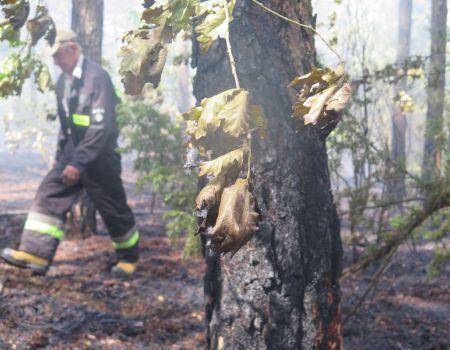 Pożar lasu w Trzepnicy