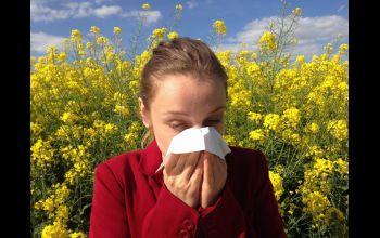 Co jest przyczyną alergii na początku wiosny?