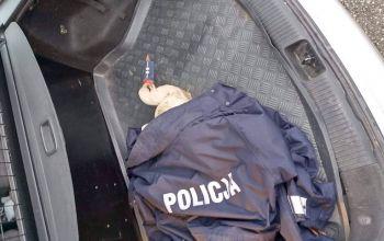 Policjanci uratowali rannego bociana