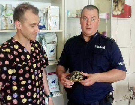 Interweniowali w sprawie żółwia