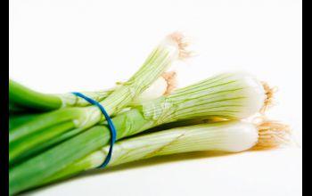 Cebula dymka – zdrowa, smaczna i łatwa w uprawie
