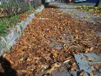 Piotrków: Dlaczego nie sprzątają liści?