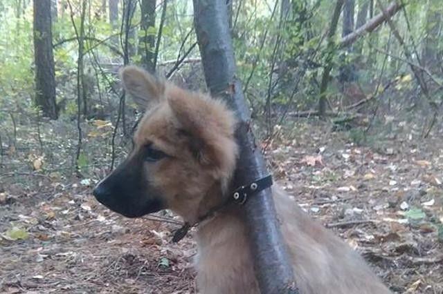 Przywiązał psa do drzewa i porzucił...