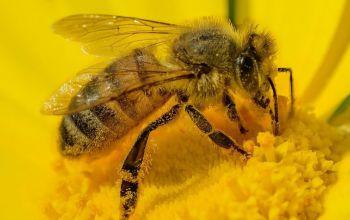 Zawiązało się Wolborskie Stowarzyszenie Pszczelarzy
