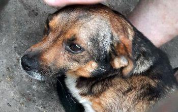 Kto strzelał do psów w powiecie tomaszowskim?