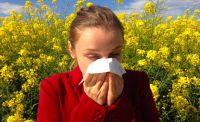 Alergicy, miejcie się na baczności!