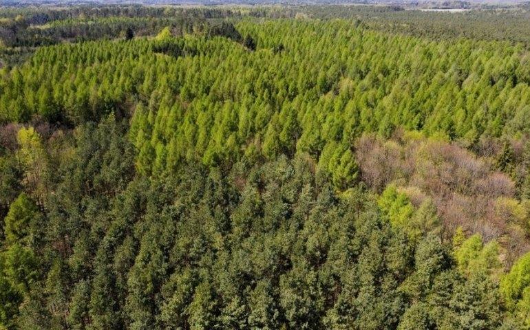 Wzrasta zagrożenie pożarowe lasów; miejscami podatność na zapalenie jest ekstremalna