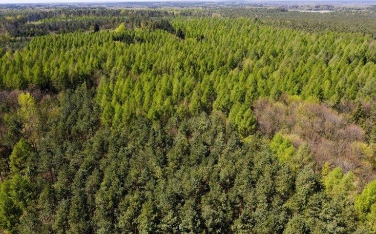 Ekstrema pogodowe powodują zmiany w lasach