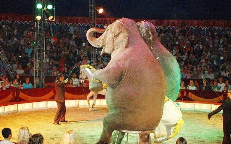 W Tomaszowie będą protestować przeciwko występowaniu zwierząt w cyrkach