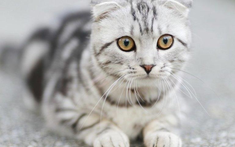 Zanim w domu pojawi się kot - co powinno znaleźć się w wyprawce?